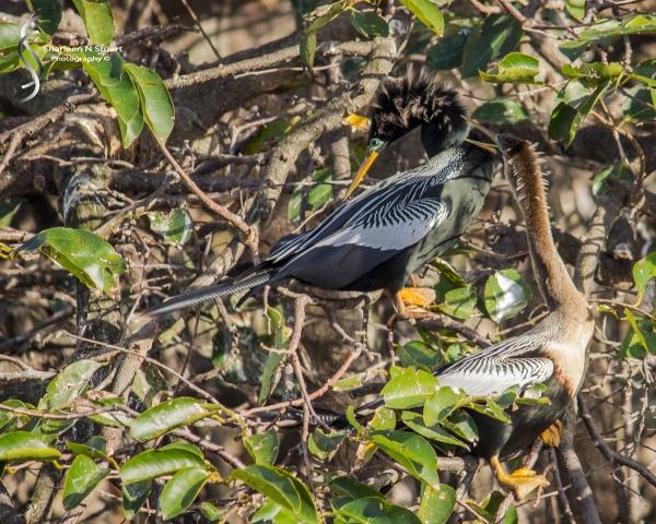 Wakodahatchee Wetlands: Delray Beach: Dec 30, 2014 8145
