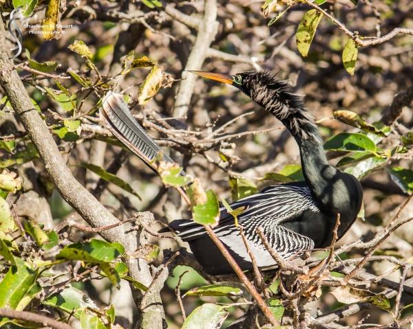 Wakodahatchee Wetlands: Delray Beach: Dec 30, 2014 8183