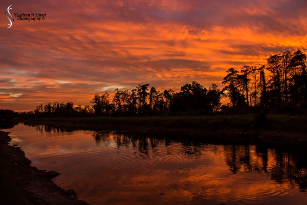 Outback on the Canal:  January 25, 2015 0147