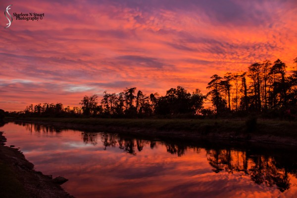 Outback on the Canal:  January 25, 2015 0161