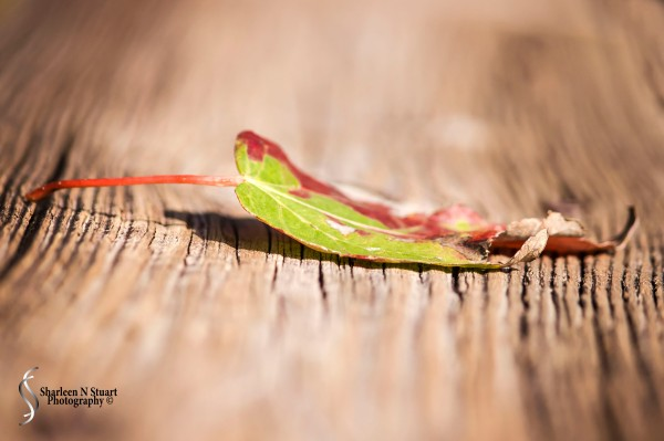 Wakodahatchee Wetlands: January 30, 2015 0503