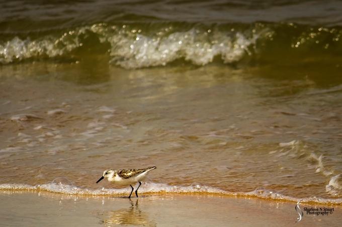 Gamble Rogers State Park, Flagler, Florida, September 7, 2014 72