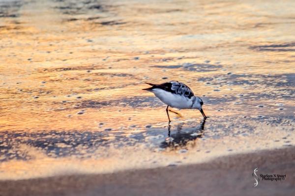 Gamble Rogers State Park, Flagler, Florida, September 8, 2014 73