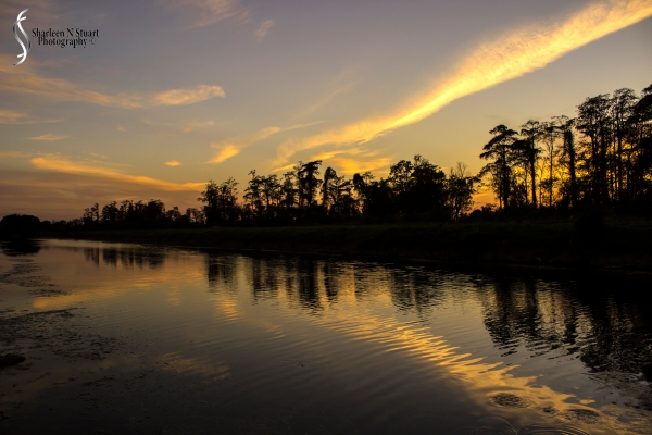 Out on the back canal:  January 7, 2015 8668