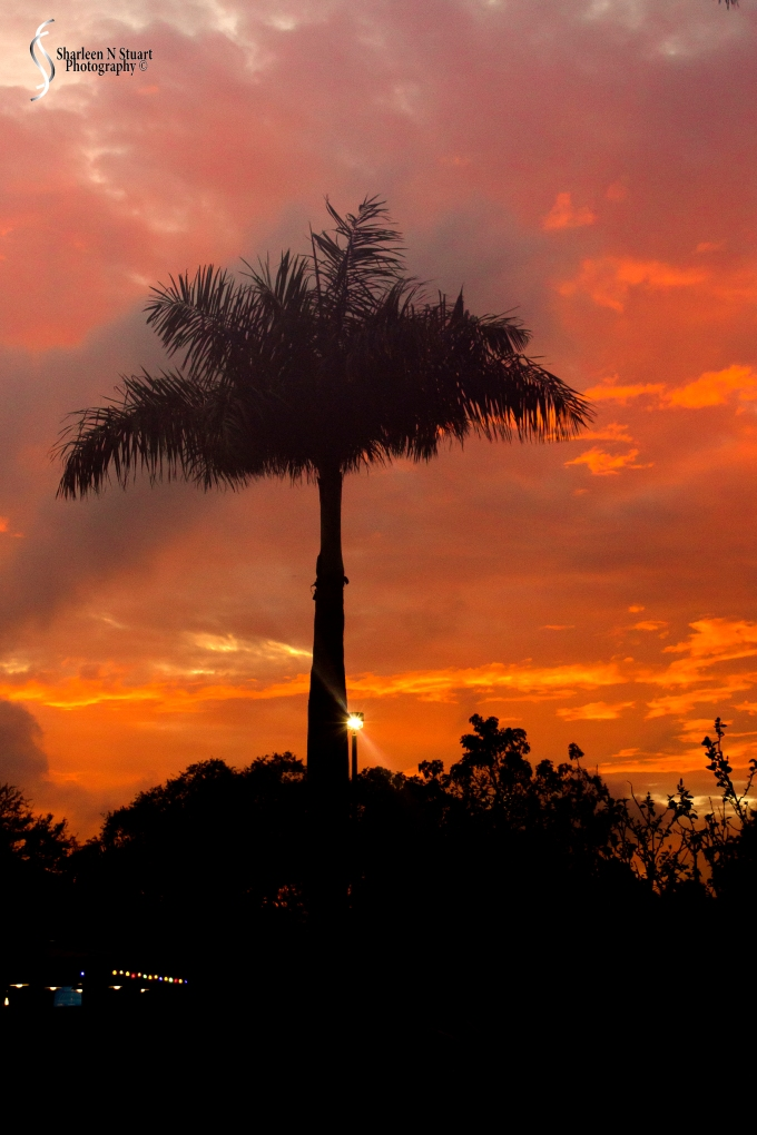 Sunset: January12, 2014: 9165
