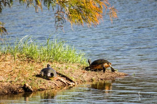 Wakodahatchee Wetlands: January 16, 2015 9389
