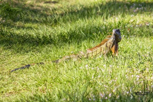 Wakodahatchee Wetlands: January 16, 2015 9428