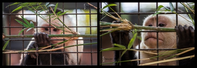 Sante Fe Rehabilitation and Teaching Zoo: February 12, 2015 1688
