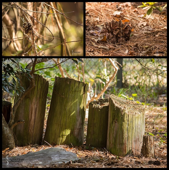 Sante Fe Rehabilitation and Teaching Zoo: February 12, 2015 1756