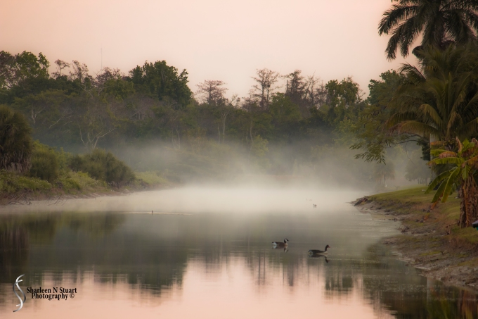 Outback on the canal:  Feb 15, 2015 2073