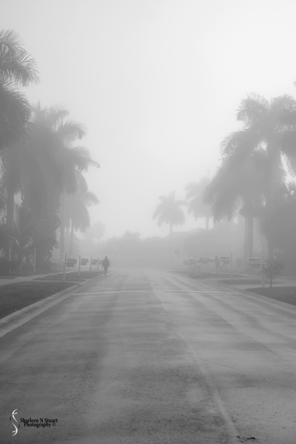 A Foggy Morning: February 23, 2015 2659