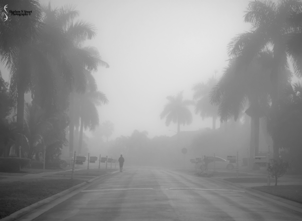 A Foggy Morning: February 23, 2015 2660