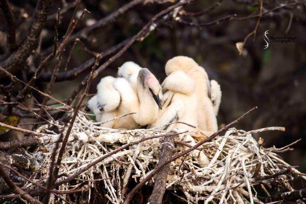 Wakadohatchee Wetlands: February 24, 2015 2731