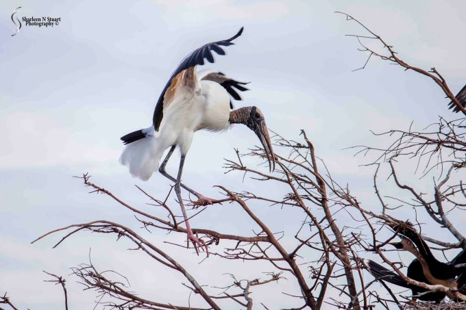 Wakadohatchee Wetlands: February 24, 2015 2759