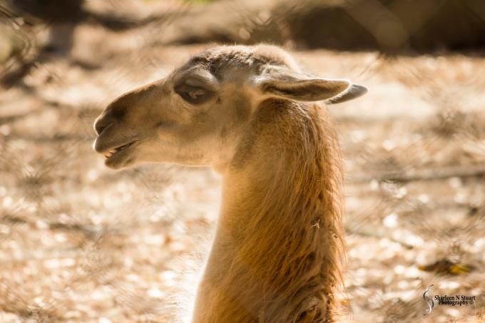 Sante Fe Rehabilitation and Teaching Zoo: February 12, 2015 1691