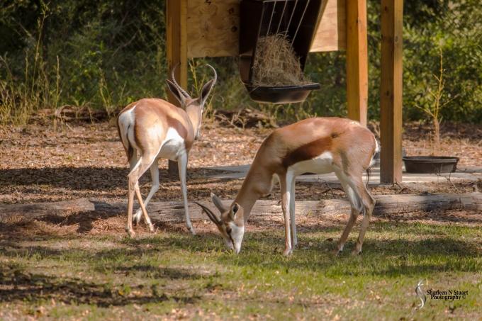 Sante Fe Rehabilitation and Teaching Zoo: February 12, 2015 1743