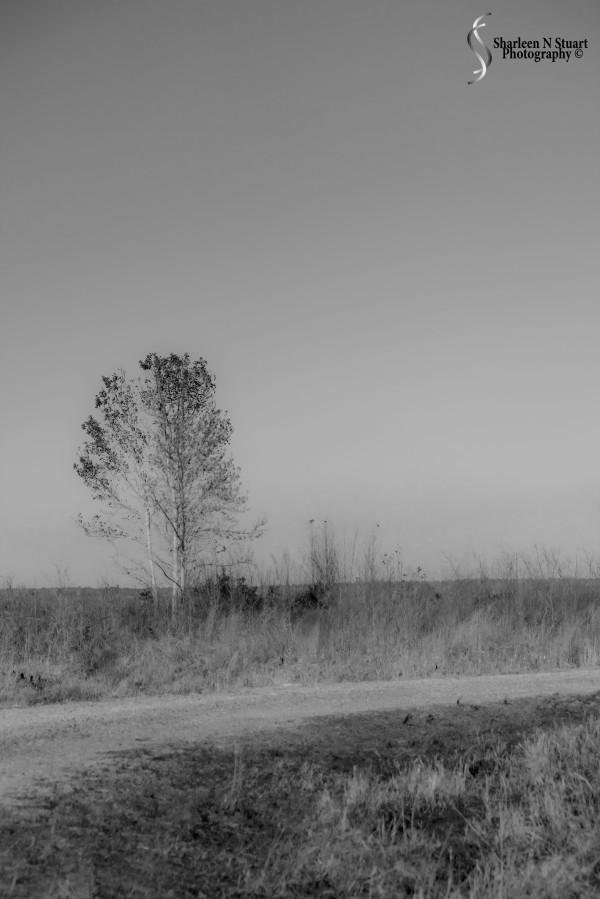 Paynes Prairie: February 13, 2014 1870