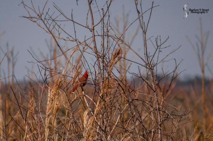Paynes Prairie: February 13, 2014 1874