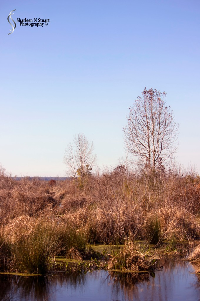 Paynes Prairie: February 13, 2014 1914