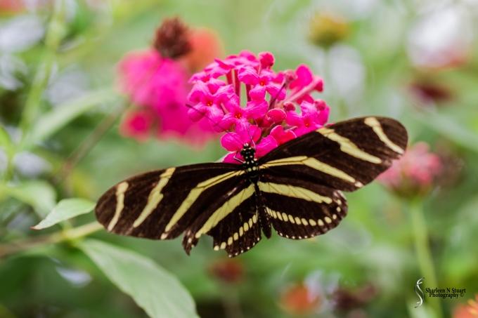 Daggerwing Nature Center. April 17, 2015 0398