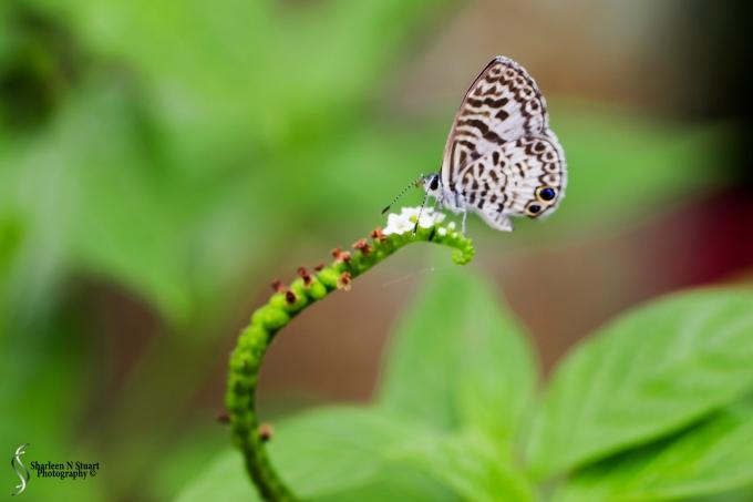 Daggerwing Nature Center: April 17, 2015 0409
