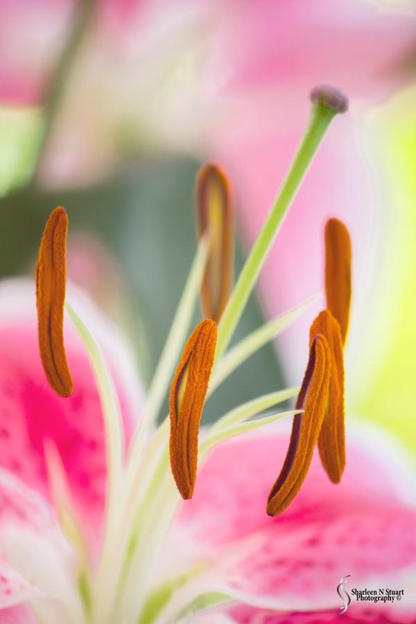 Sharetographers: Floral: April 19, 2015 0692