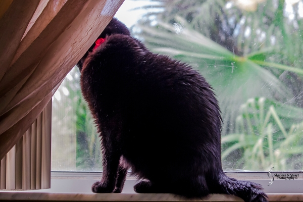 Moonshine looking for the Cardinal.