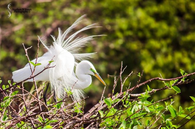 Wakadohatchee Wetlands: March 21, 2015 7987