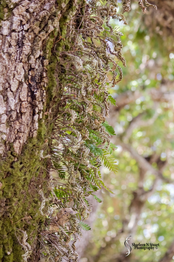 Tiny Ferns line the bark of the enormous trees.
