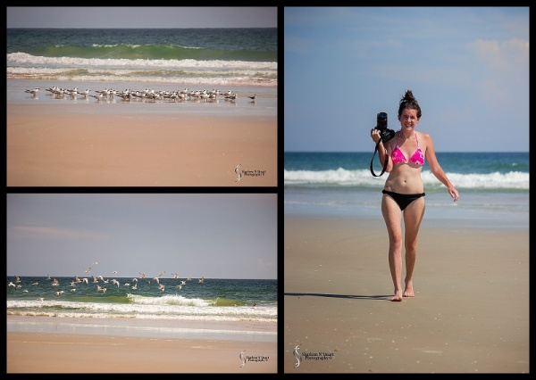 A flock of Terns landed on the beach, and Amy decided she was going to go and photograph them. I decided to pick up my camera as well.