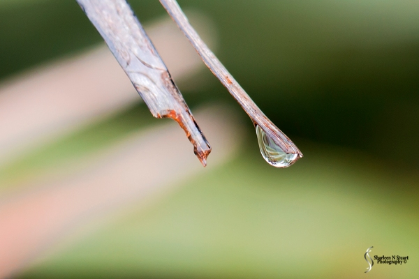 At the tip of a branch.