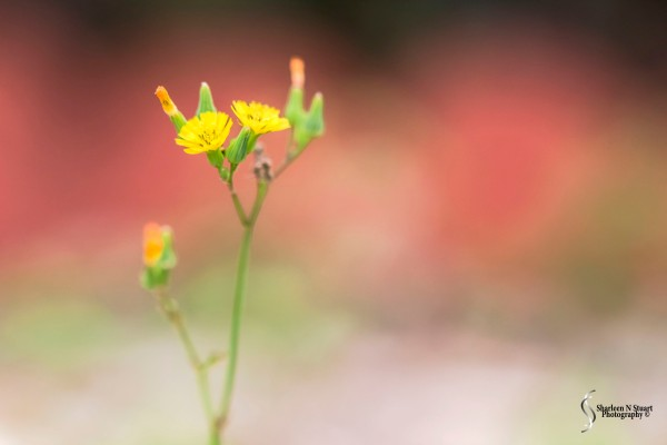 Weeds can be beautiful.