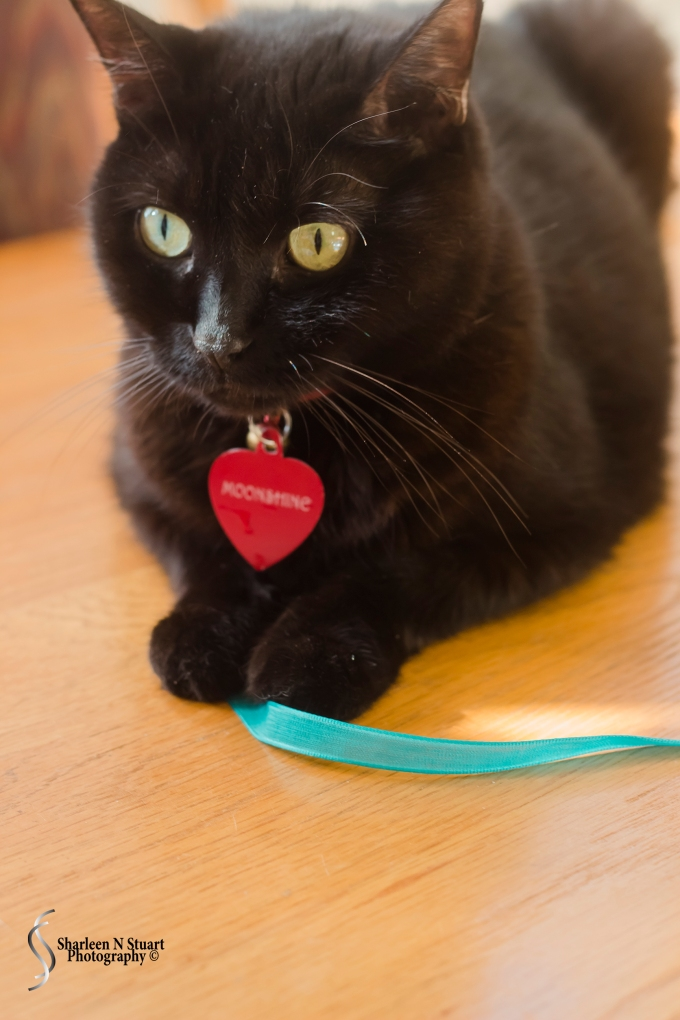 Moonshine helping with the ribbon