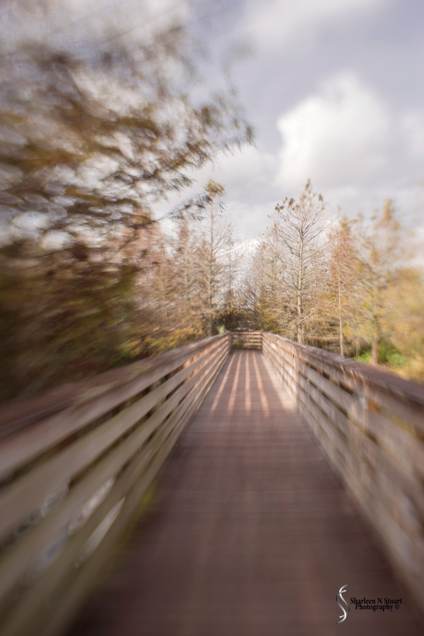 Practicising with the lensbaby