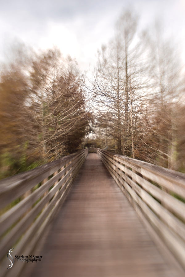 I forced myself to take only one lens to the wetlands - That was my sweet 35 Lensbaby. That was tough, but I knew if I had the zoom it would not come off. I stopped in the the treed area to practice with this lens.