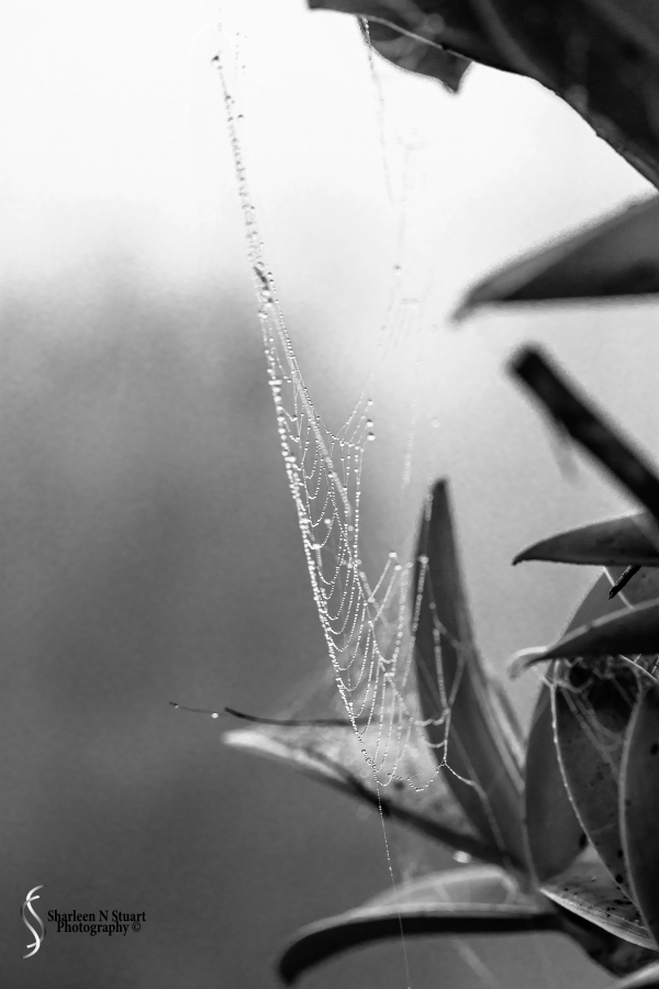 Raindrops and Spiderwebs