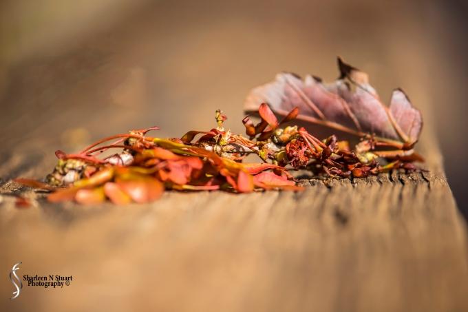 Narrow Depth of Field: Leaves on a railing