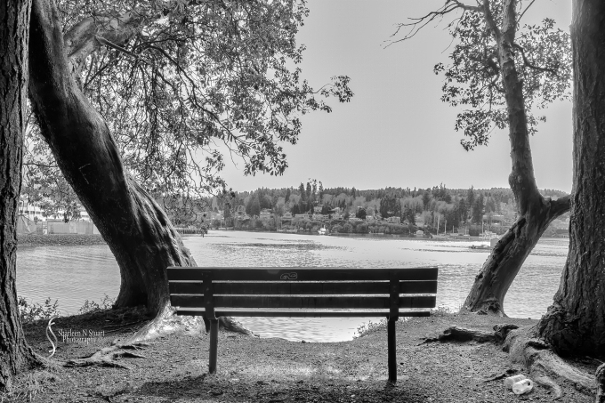 Bainbridge Island - a view from the bench.