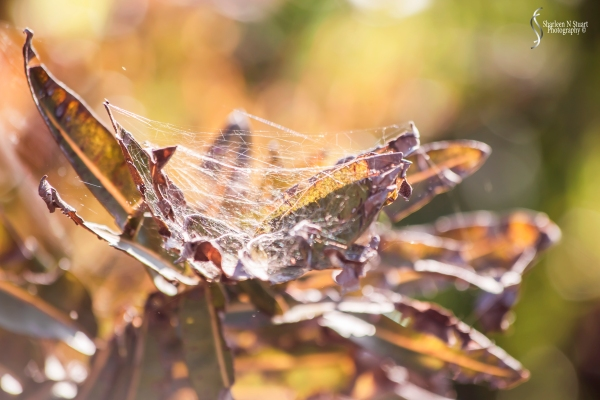 Walking in the wetlands - spider web