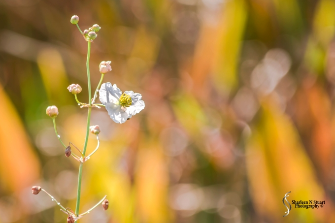 Wild flowers amidst the various shades of grasses.
