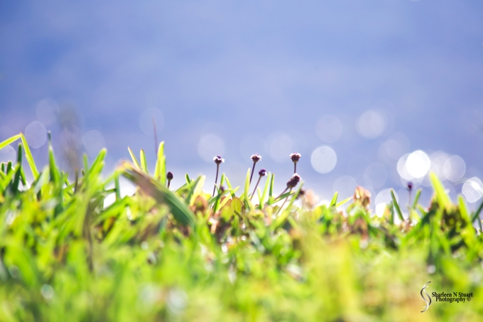 Sitting on the edge of the grass are these tiny weed.