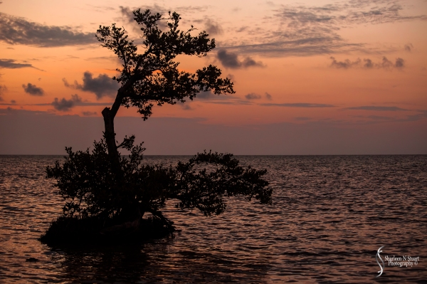 Sunrise - Long Key State Park.