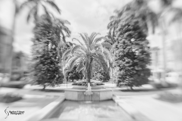 When I go out I try to take a couple of images with my Lensbaby sweet 35.