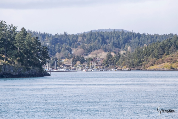 Nestled into this little alcove is Friday Harbor. I am looking forward to spending time exploring the island. Hopefully we will not get wet but more about that in the next blog.