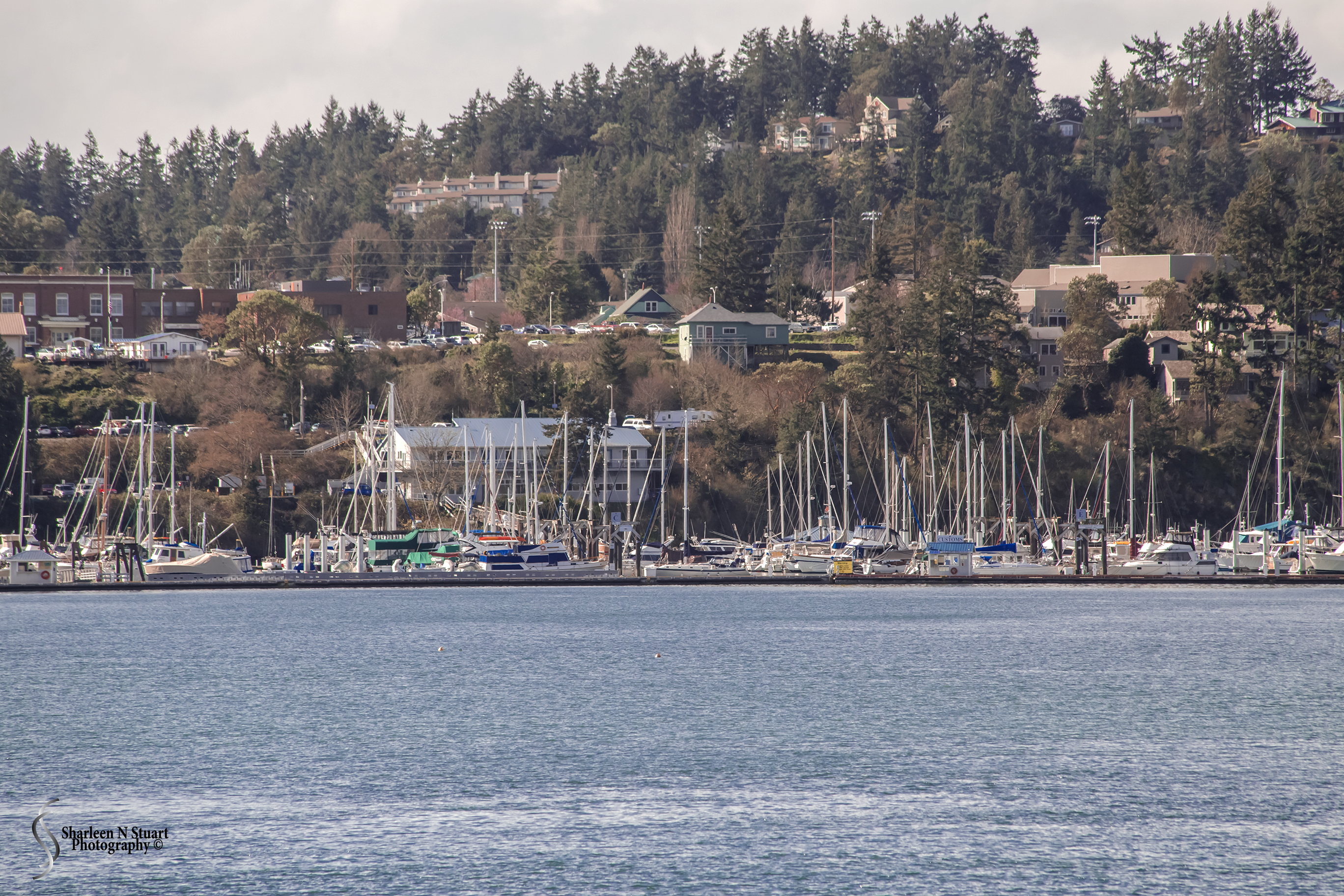 After about 2.5 hours of ferry boat riding through the beautiful Orcas Islands we have finally arrived in Friday Harbor.