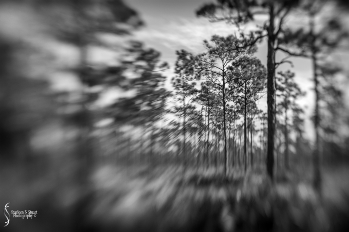 Johnathon Dickinson State Park: October 15, 2016 3763