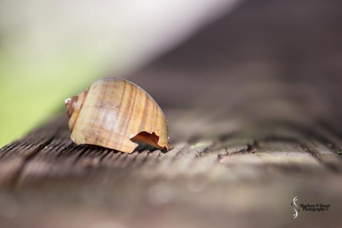 Shell on the boardwalk