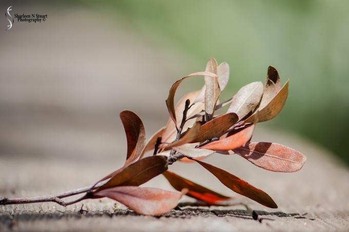 Leaf on the boardwalk