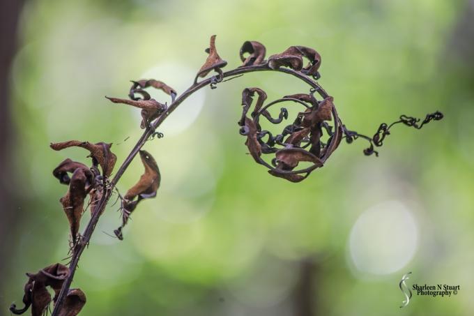 Dead fern leaf