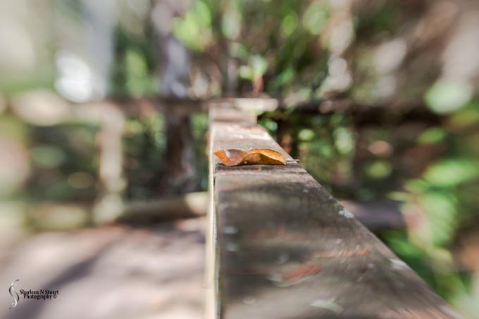 Leaf - using the Lensbaby twist
